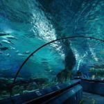 Океанариум в Пекине