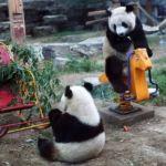 Парк дикой природы в Пекине
