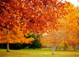 Осень в Пекине