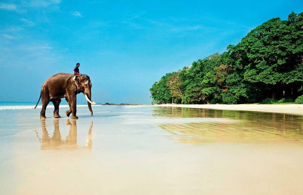 слон и пляж