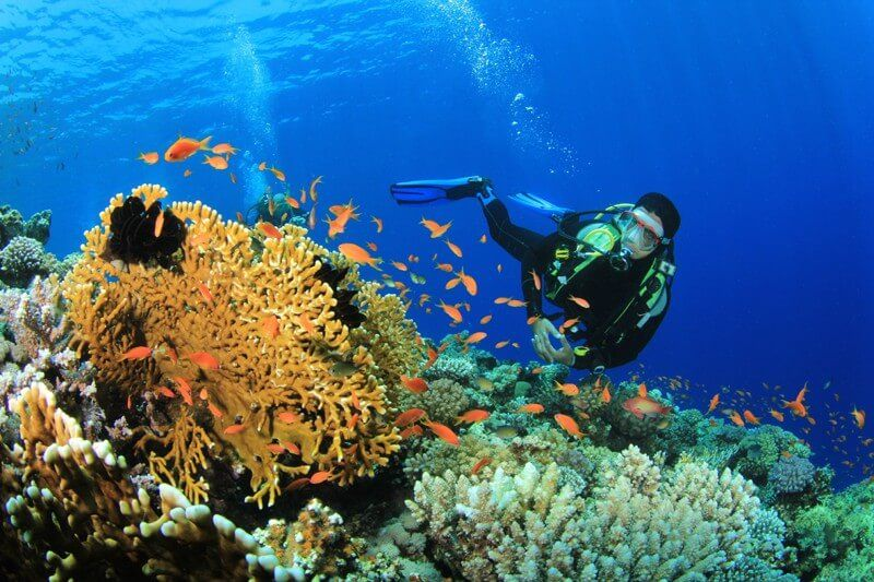 фото дайвинга в Адриатическом море