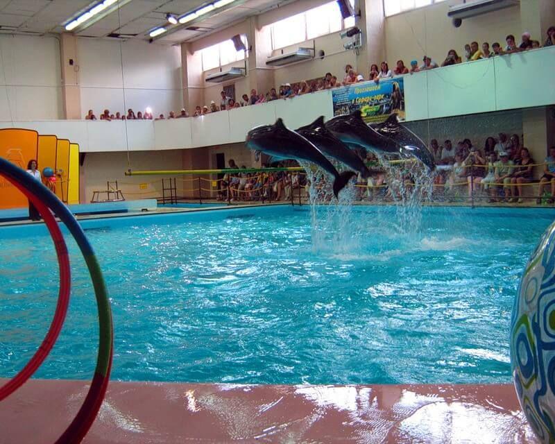 фото гелинджикского дельфинария