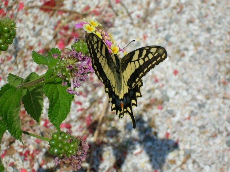 фото долина бабочек