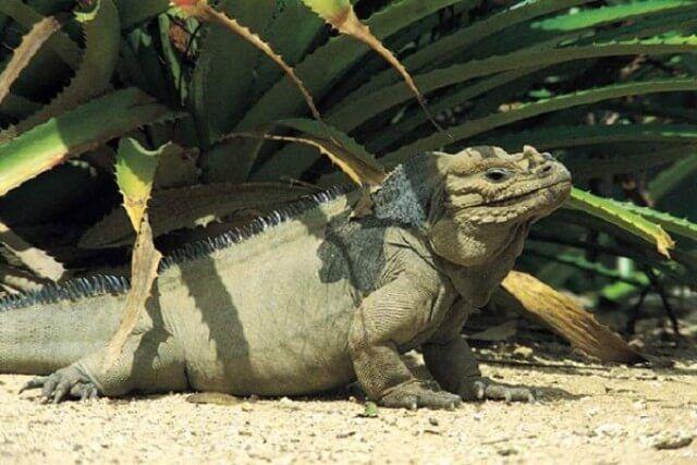 национальный парк Харагуа