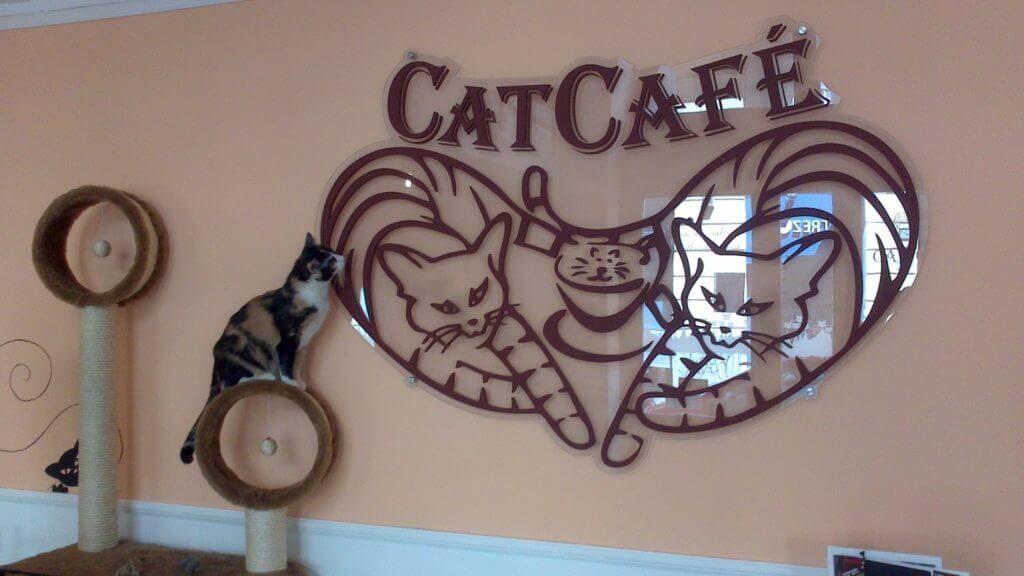 Фото кафе «Cat cafe» в Будапеште