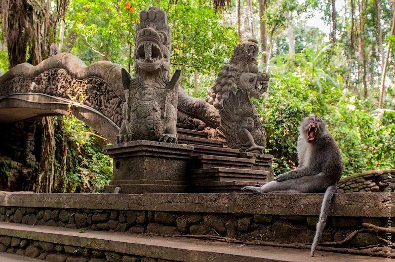 фото леса обезьяна в Убуде