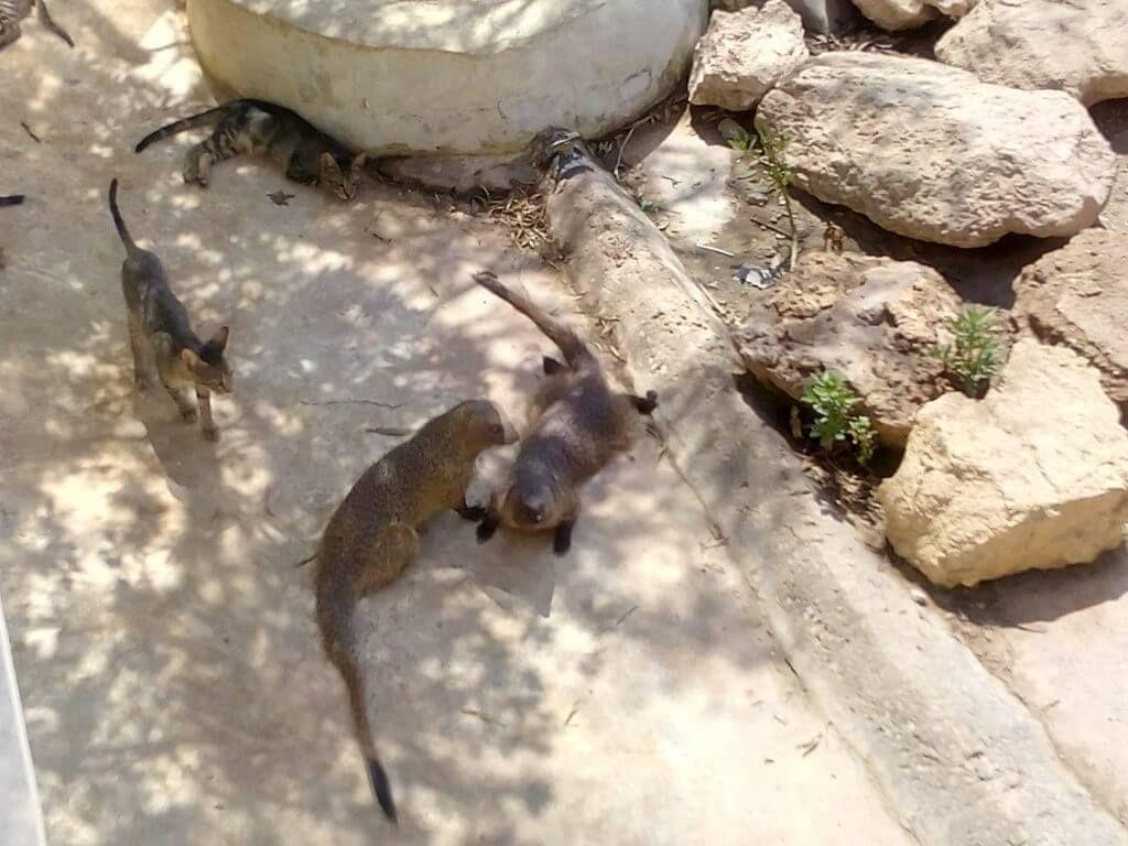 Сафари парк Frigale