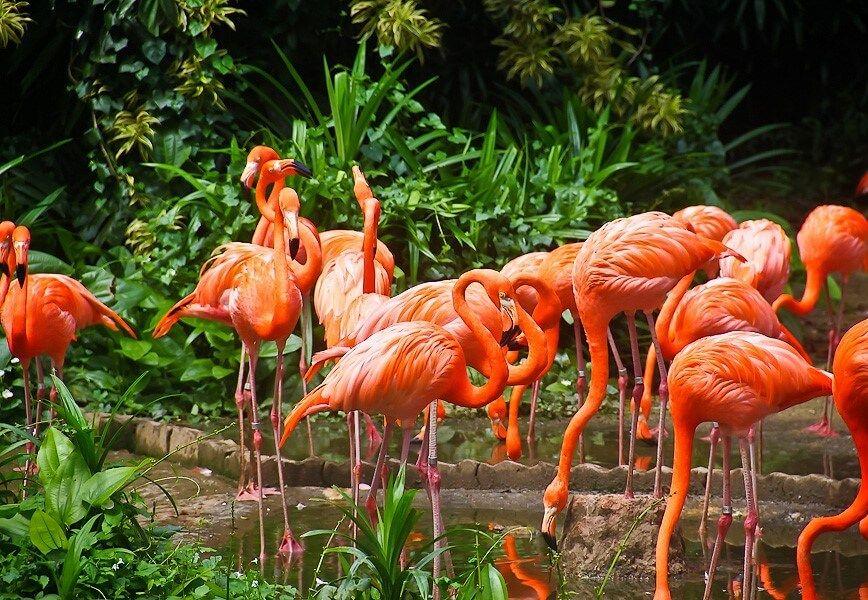 фото парка птиц в Сингапуре