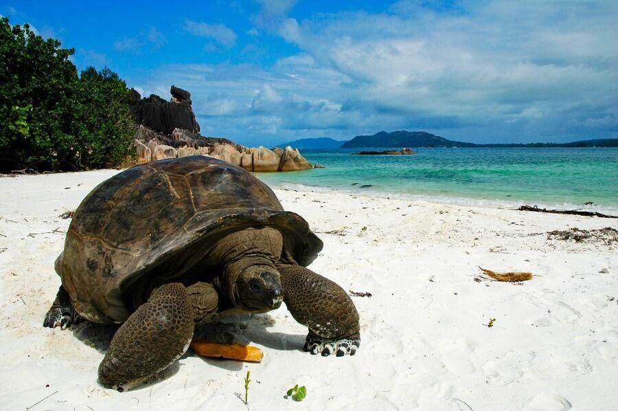 фото на острове Праслин Сейшельские острова
