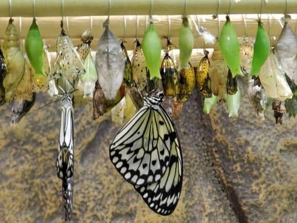 Ферма бабочек в Голубицкой