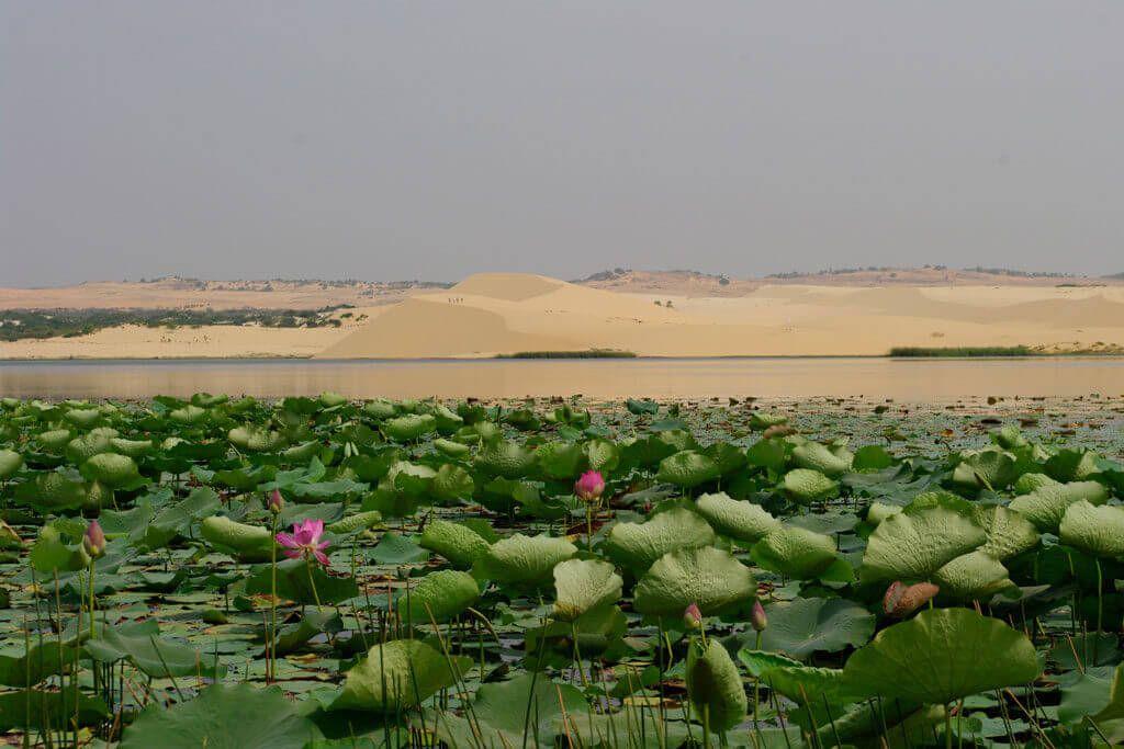 Озеро лотосов в Муйне Вьетнам