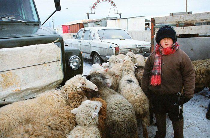 Каракол скотный рынок