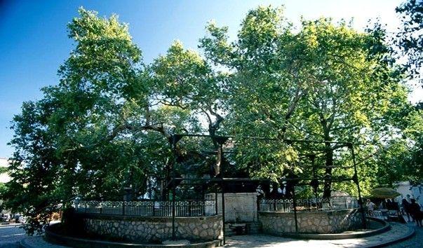 Дерево Гиппократа, Остров Кос, Греция