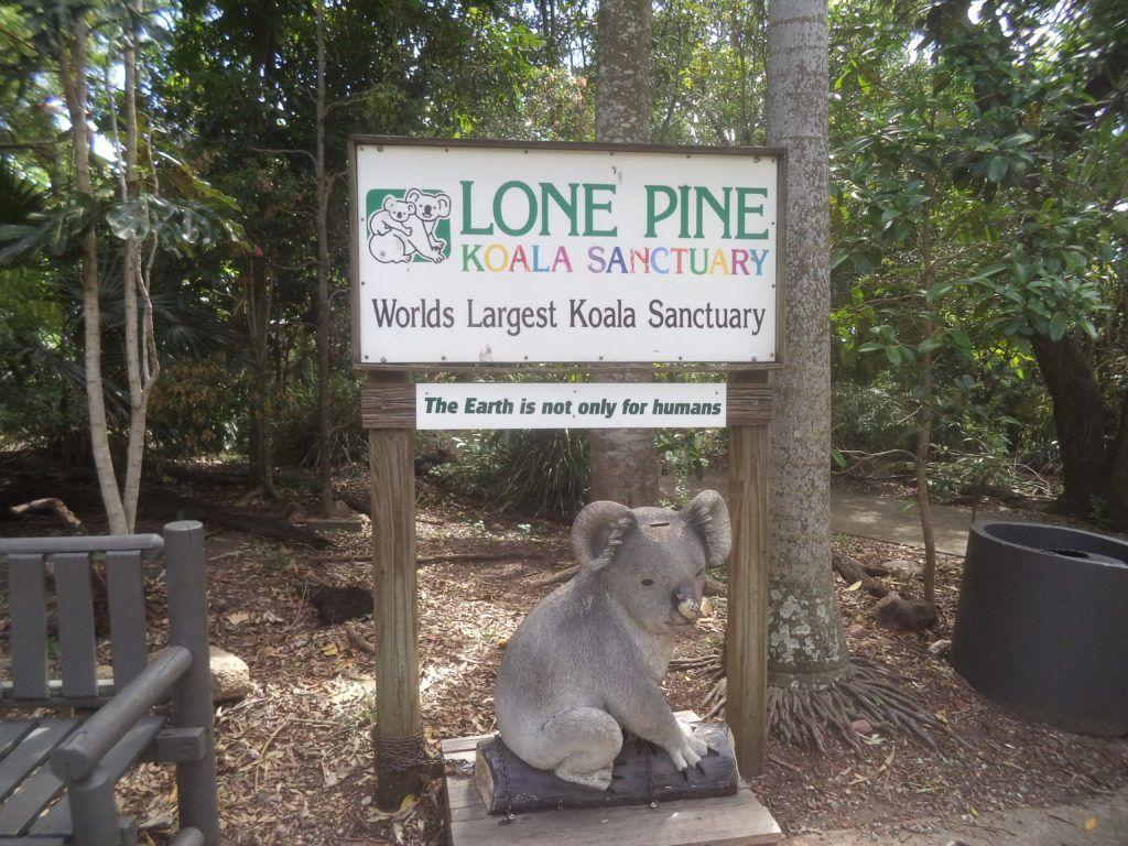 Заповедник коал в Брисбене