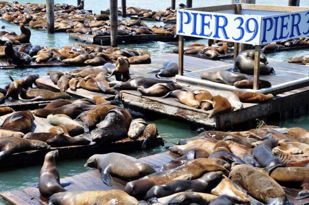 Рыбацкая пристань, Пирс 39 в Сан-Франциско