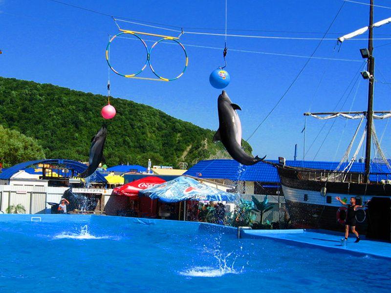 Дельфинарий в селе Архипо-Осиповка, Краснодарский край
