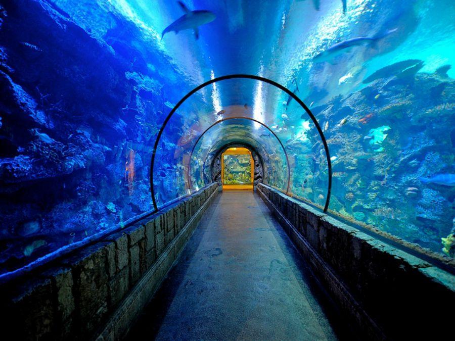 Аквариум «Акулий риф» в отеле Mandalay Bay, Лас-Вегас