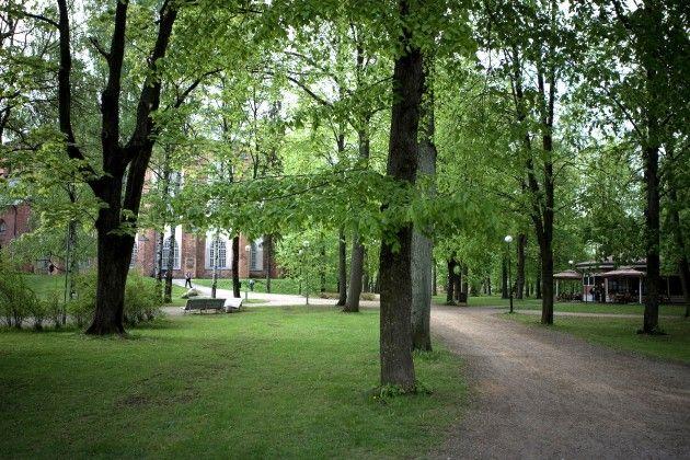 Загадочный парк на холме Тоомемяги в Тарту