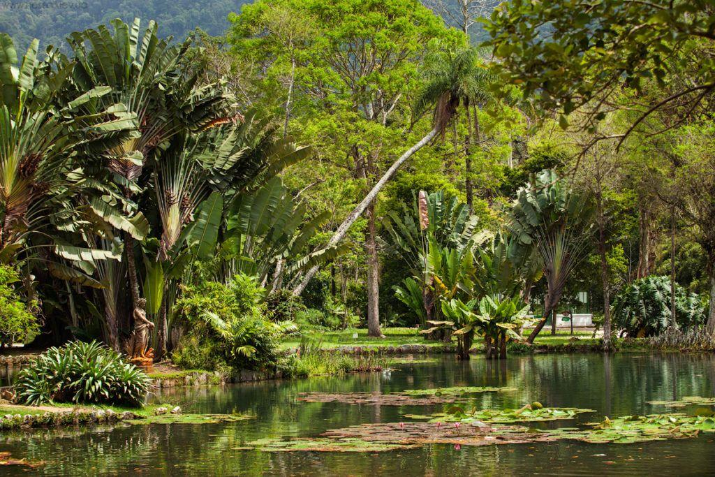 Бразилия, Рио Де Жанейро, Национальный Ботанический сад
