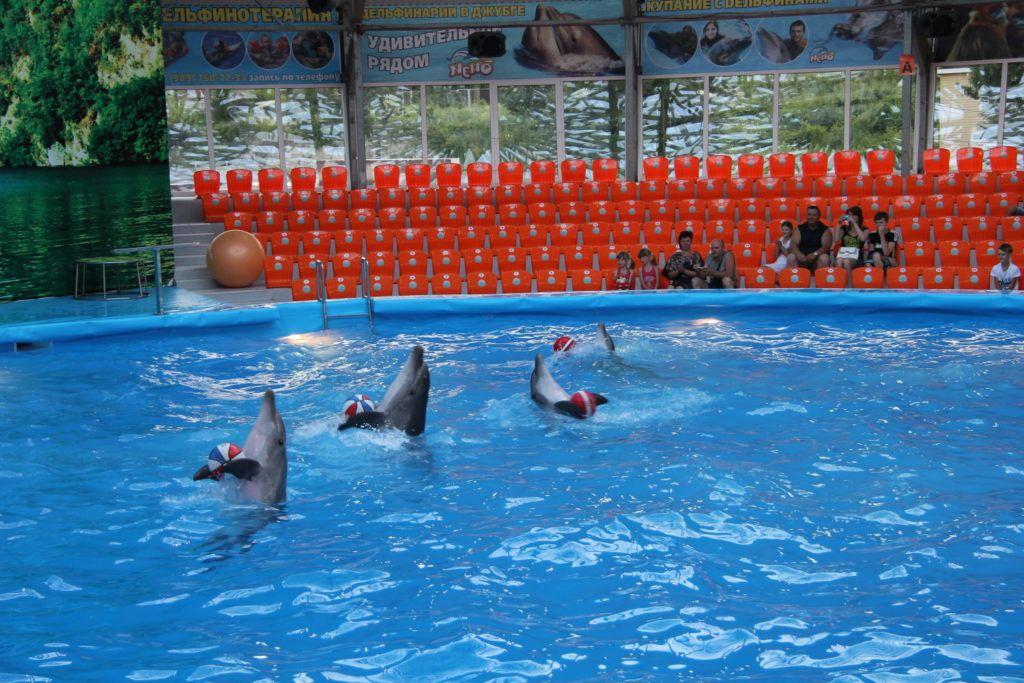 Дельфинарий в Джубге, Туапсинский район