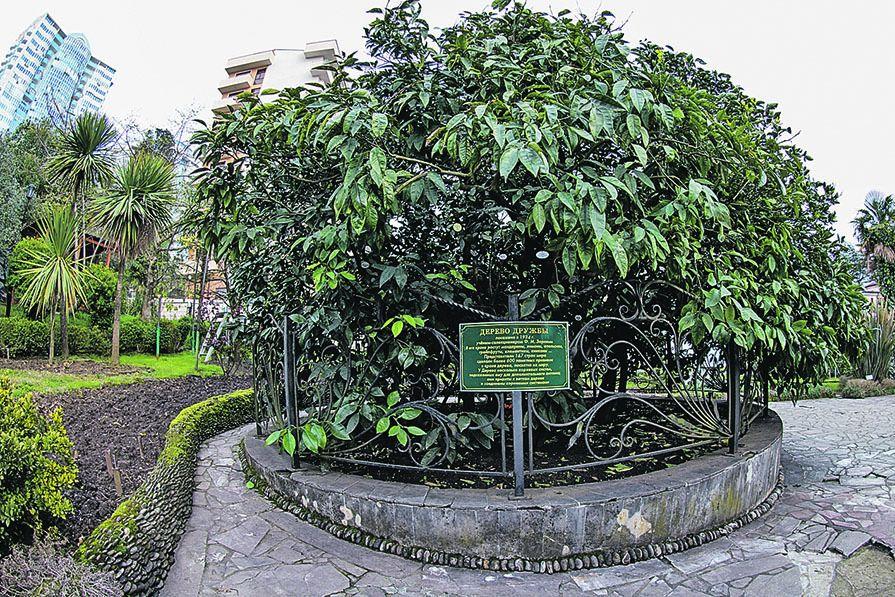 Дерево Дружбы в Мацесте