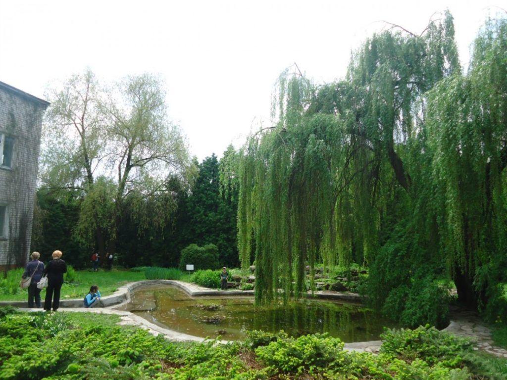 Ботанический сад в Йошкар-Оле