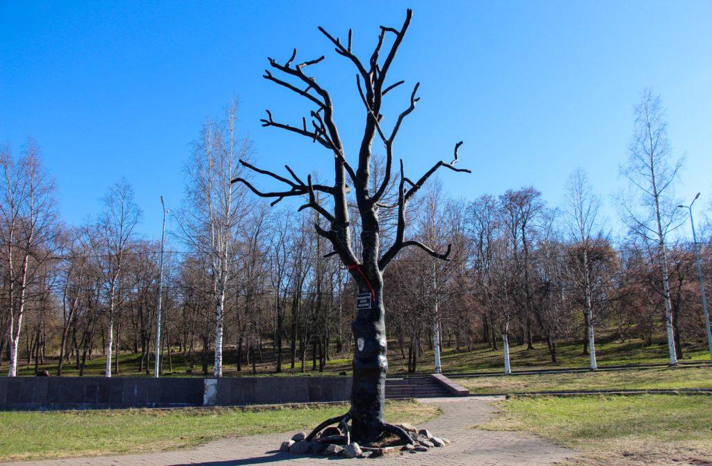 Дерево желаний в Петрозаводске