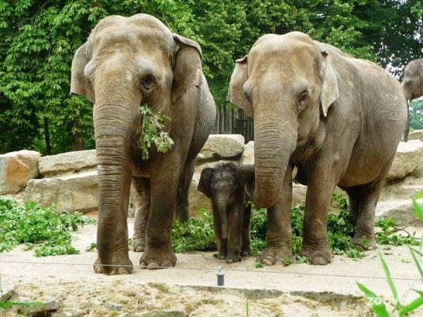 зоопарк в Эммене