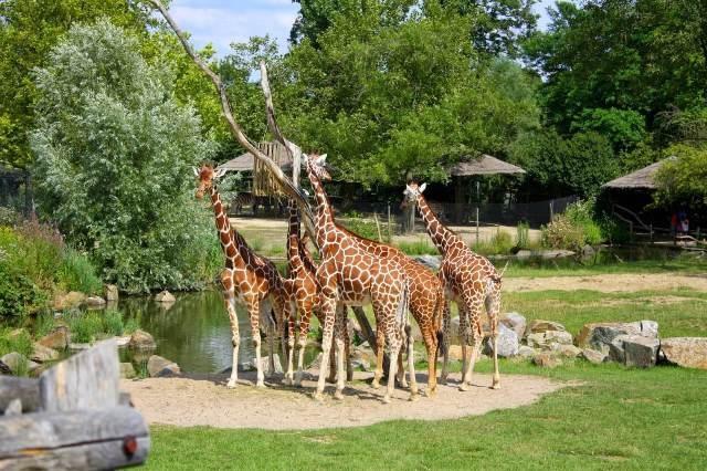 Зоопарк «Бляйдорп» в Роттердаме
