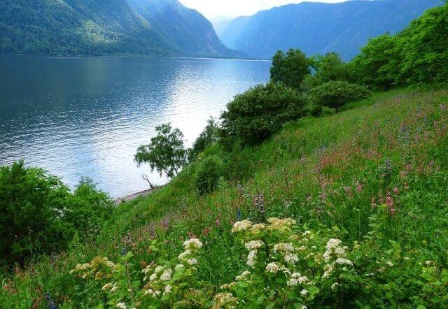 Растительный мир на берегу Телецкого озера