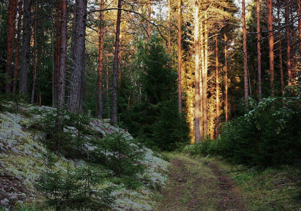Природный заповедник «Вепсский лес» близ Тихвина