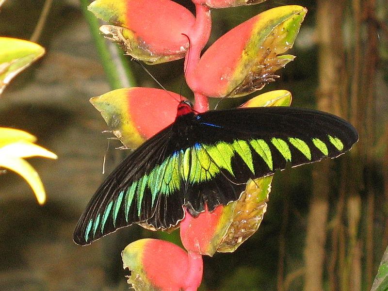 Куала-Лумпур, Парк орхидей, гибискусов и бабочек
