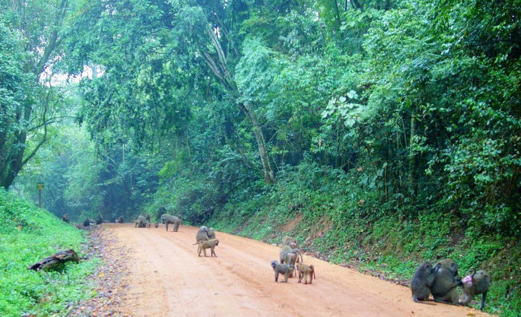 Национальный парк Кибале, Уганда, Африка