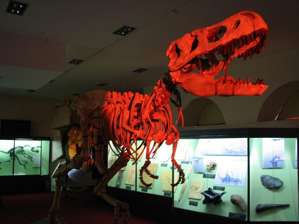 Вятский палеонтологический музей, Киров