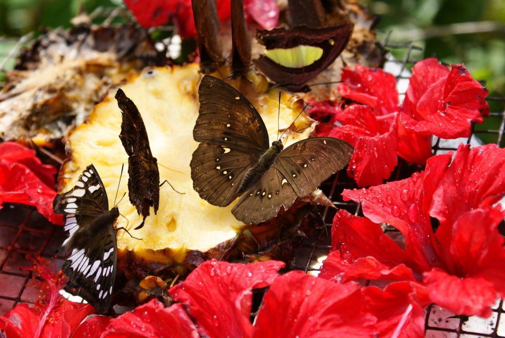 Парк бабочек на Самуи
