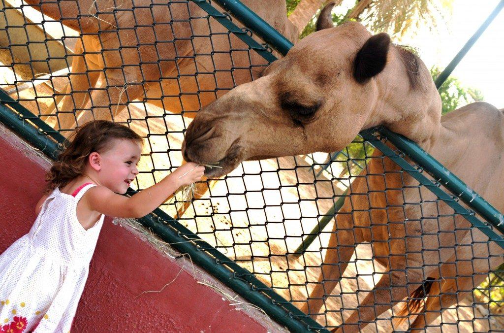 Арабский центр дикой природы в Шардже
