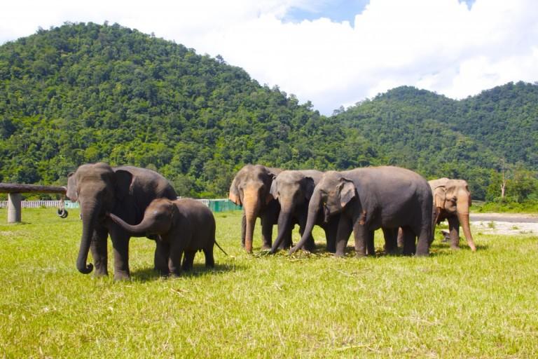 Слоновий заповедник в Тайланде