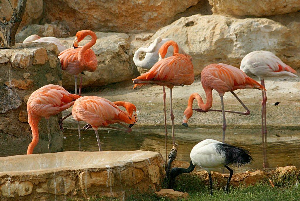 Птичий парк, Пафос