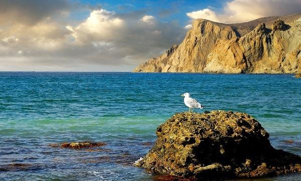 чайка на морском берегу