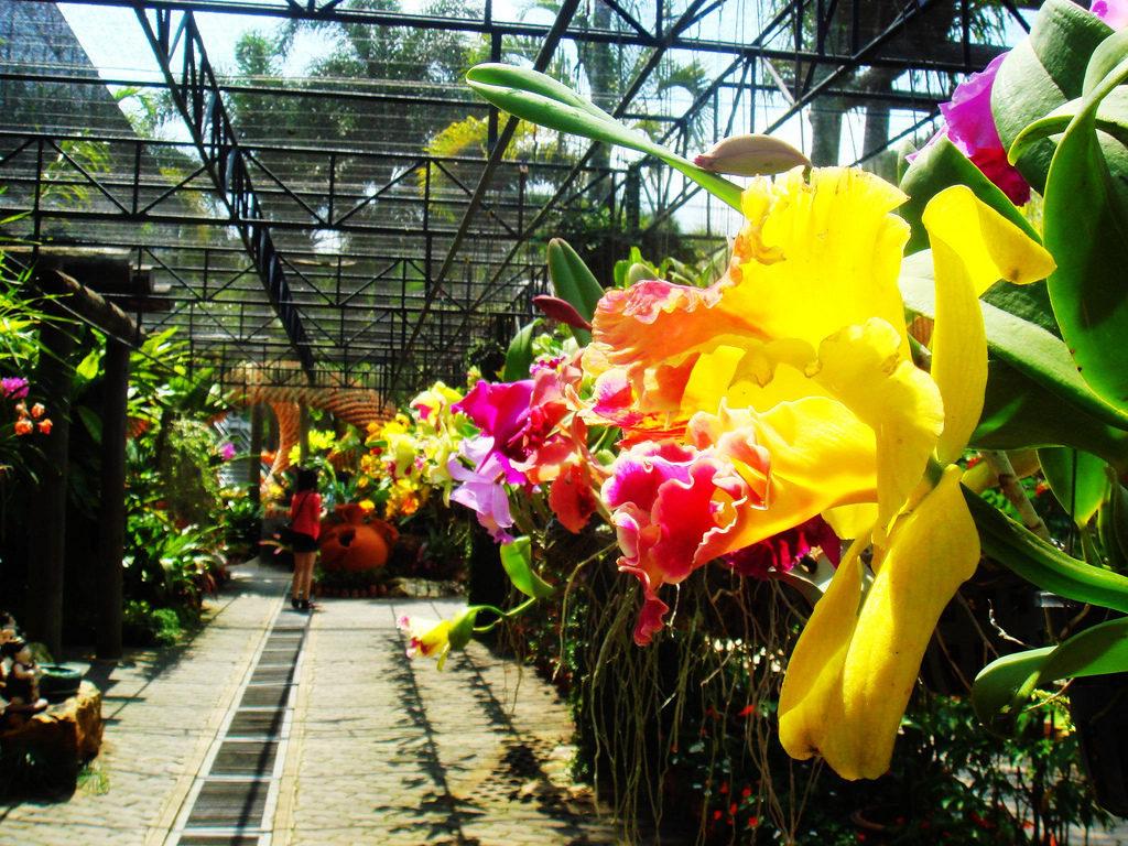 Сад орхидей в Пхукете