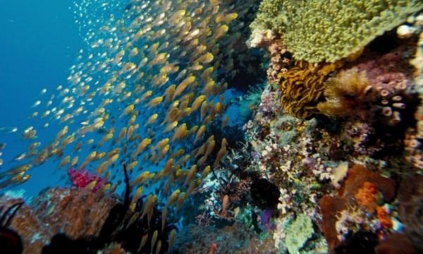подводный мир аравийского моря