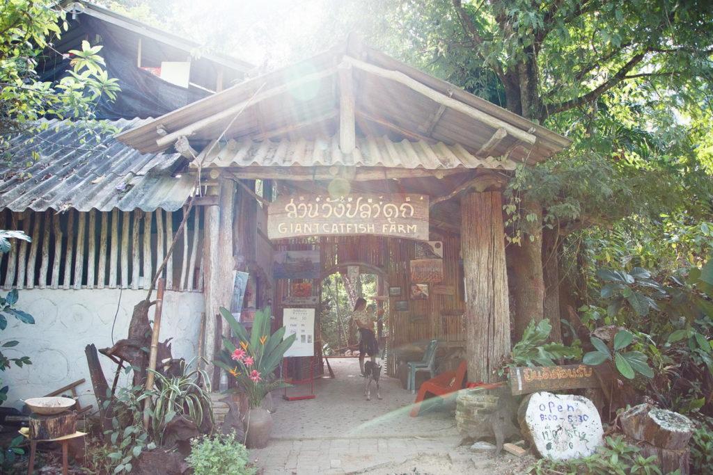 Ферма сомов, Ао Нанг, Тайланд