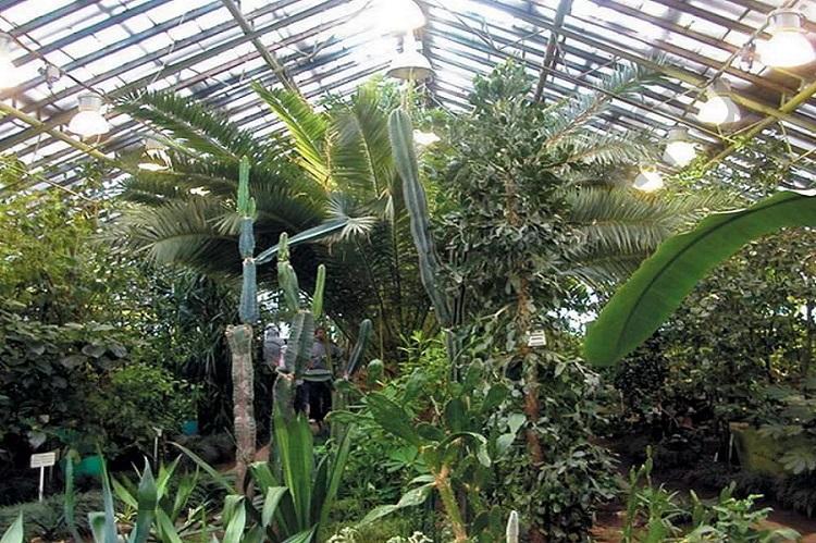 Полярно-альпийский ботанический сад в Кировске