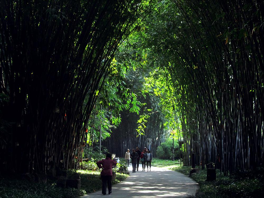 Бамбуковый парк Чэнду