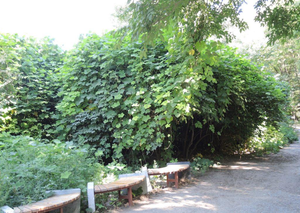 Ташкентский ботанический сад