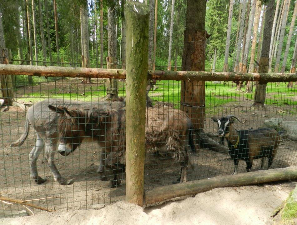 Зоопарк близ д. Мандроги