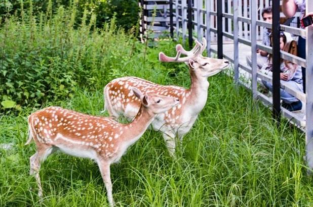 Мини-зоопарк «Дом лани» в Зеленограде