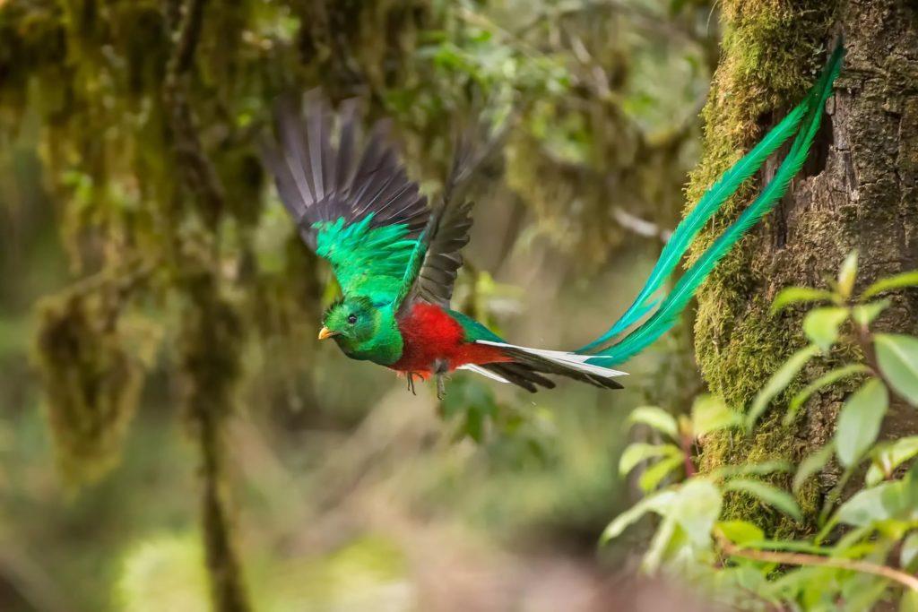 Биосферный заповедник «Кетцаль» в Гватемале