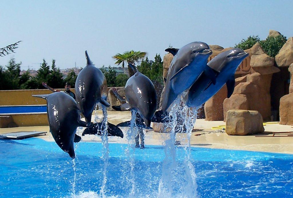 """Дельфинарий """"Marineland"""" в Бланесе"""