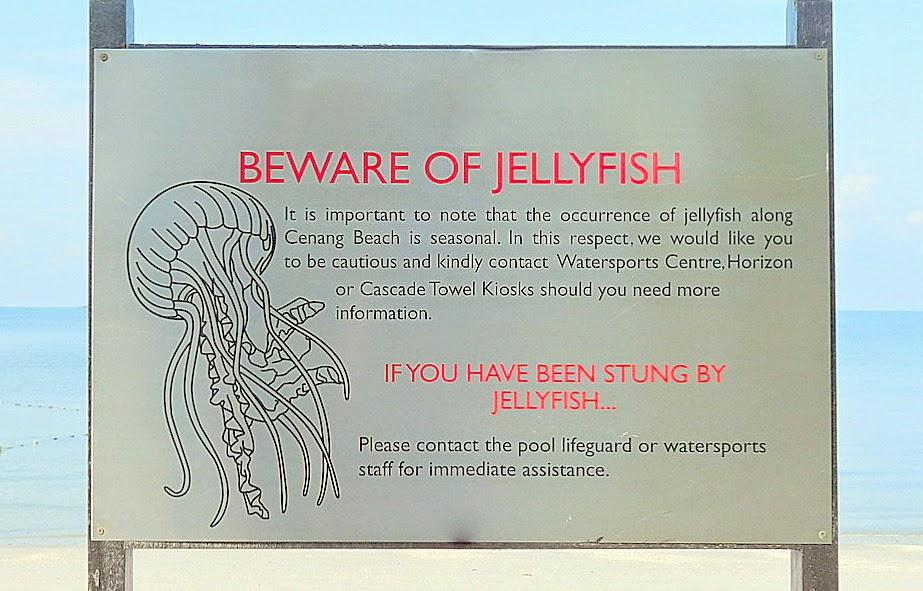 Плакат, предупреждающий о медузах в море